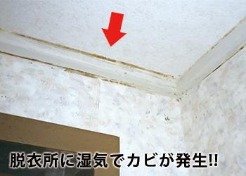【アイデア雑貨】バイオ 脱衣所のカビきれい コジット